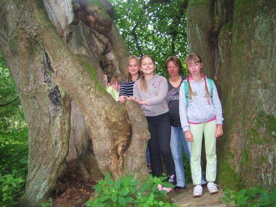 památný strom Dolní popovská lípa
